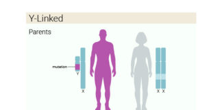 Know About Genetic Infertility In Males And Females