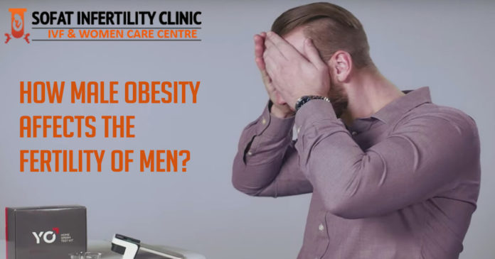 How Male Obesity Affects The Fertility Of Men?