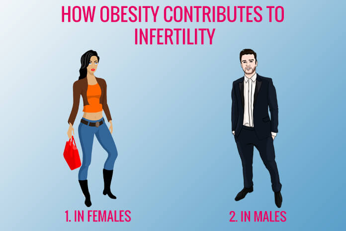 How Obesity contributes to Infertility