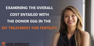 Examining The Overall Cost Entailed With The Donor Egg In The IVF Treatment For Fertility