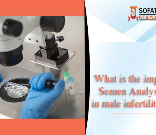 What is the importance of Semen Analysis Report in male infertility treatment?