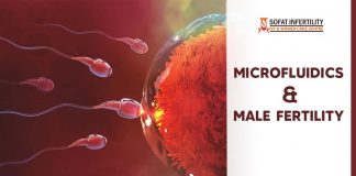 Microfluidics and Male fertility