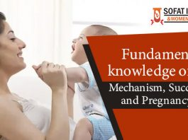Fundamental knowledge of IVF - Mechanism, Success rate and pregnancy test