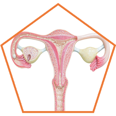Ovarian Cysts Treatment In India,Punjab