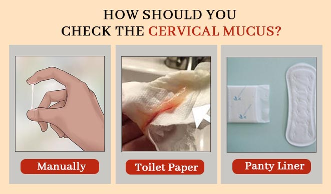 How To Track The Cervical Mucus